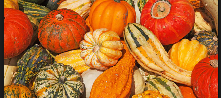 Close up of pumpkins and squash at market
